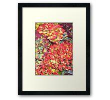 Autumn Hydrangeas, in russet colours Framed Print