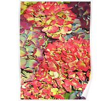 Autumn Hydrangeas, in russet colours Poster