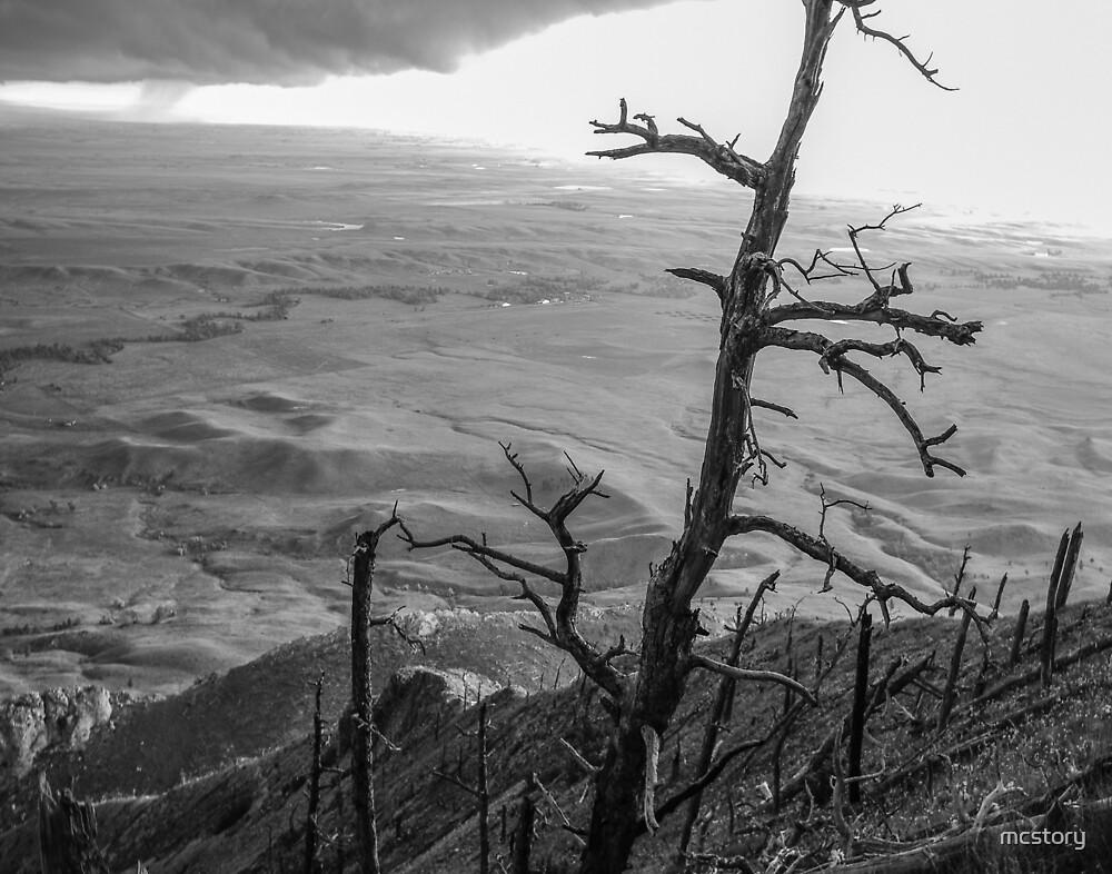Stark Tree by Mary Carol Story