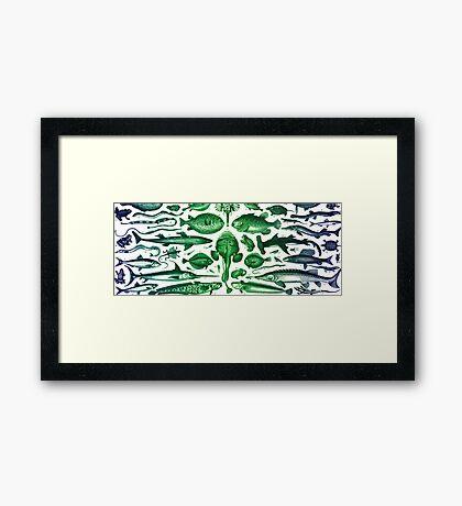 Study of Fish Framed Print
