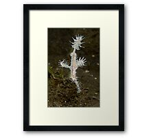 Ornate Ghostpipefish - Solenostomus paradoxus Framed Print