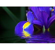 Reflections of Iris Photographic Print