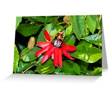 Crimson Passion Flower Greeting Card