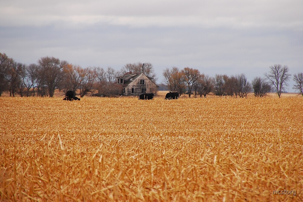 Cows In The Corn by Mary Carol Story