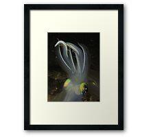 Squid Framed Print