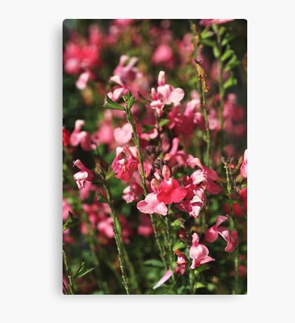 Small And Pink Flowers Sylvia Sage Canvas Print