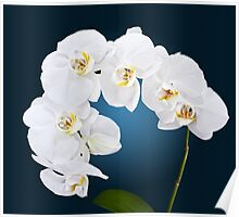 Orchid - 2 Poster