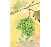 Picture a Vineyard Photographic Print