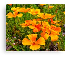 Popping Up And Popping Out Canvas Print