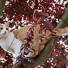 Louis in the Beech Tree by AnnDixon