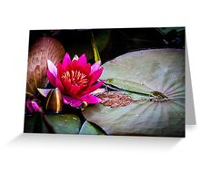 Red water lily Greeting Card