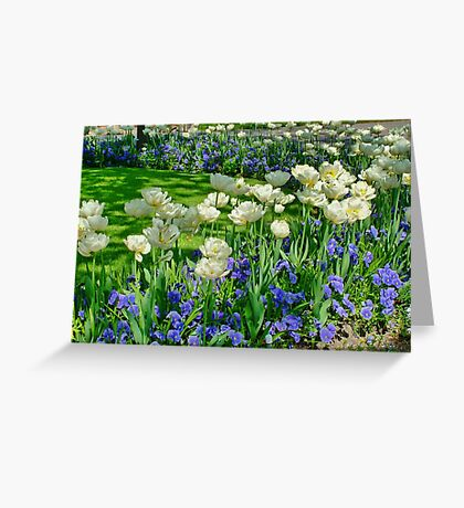 Tulips and Viola's Greeting Card