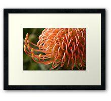 Orange Anatomy Framed Print