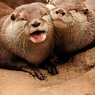 Otterly Adorable II by Daniela Pintimalli