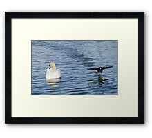 Comical Coot Framed Print