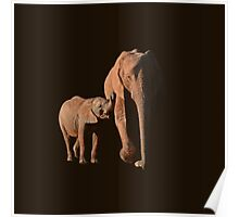 African Elephant mother and calf Poster