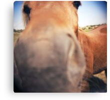 The Nosey Horse Canvas Print