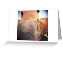The Nosey Horse Greeting Card