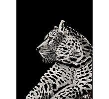 Black and White Cheetah Orange Eyes Photographic Print