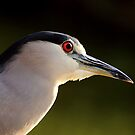 Night Heron by Daniela Pintimalli
