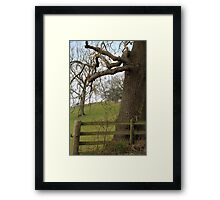 Truncated ~ Portrait Tree Image, Tremeirchion, North Wales UK Framed Print
