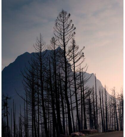 Glacier National Park after 2015 Wildfire .2 Sticker