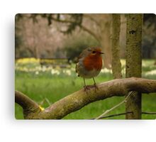 Not just for Christmas cards Canvas Print