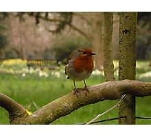 Not just for Christmas cards Photographic Print