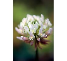 Clover Color Photographic Print