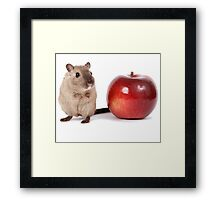 Teacher's Pet - Cute Mouse - T-Shirt Sticker Framed Print