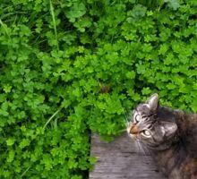 Cat in a Clover Field Sticker