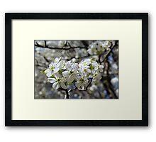 Spring Blossom - white flower Framed Print