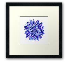 Beautiful unique deep blue chrysanthemum Framed Print