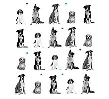 Dogs Dogs Dogs Dogs Dogs Photographic Print