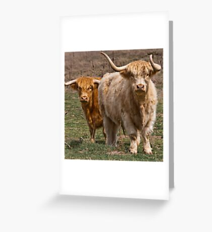 Woolly Greeting Card