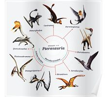 Pterosauria: The Cladogram Poster