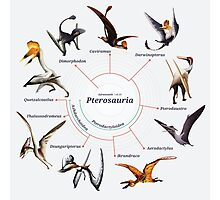Pterosauria: The Cladogram Photographic Print