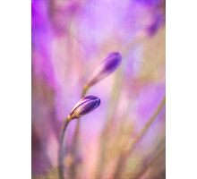 Reverie in purple Photographic Print