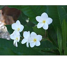 Tahitian white flower Photographic Print