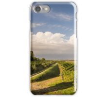 grapevine field in the italian countryside iPhone Case/Skin