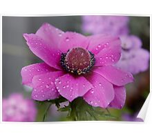 Anemone in the Pink Poster