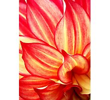 Petals Like Flames, Red and Yellow Dahlia Photographic Print