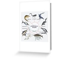 Ichthyosauromorpha: The Cladogram Greeting Card