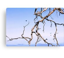 Scorched Trees Canvas Print