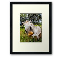 Spanish Horse Framed Print