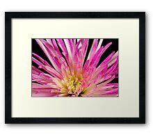 Flower- close up Framed Print
