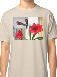 THE STORY OF AN AMARYLLIS Classic T-Shirt