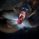 Exorcising demons by alan shapiro