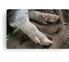 Hog's Feet! Canvas Print
