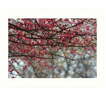 Spring Has Sprung Photographic Watercolor Art Print
